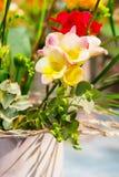 Rose vibrant de fleur avec le fond jaune d'alstroemeria Images stock