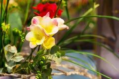 Rose vibrant de fleur avec le fond jaune d'alstroemeria Photo libre de droits