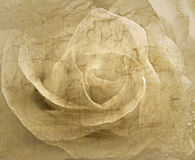 Rose vintage background Royalty Free Stock Image