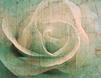 Rose vintage background Royalty Free Stock Photo
