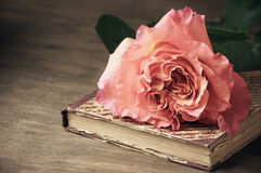 Rose and vintage book Royalty Free Stock Photography