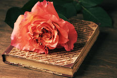 Rose and vintage book Stock Images