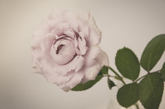 Rose Vintage Flowers Fotografie Stock