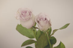 Rose Vintage Flowers Image libre de droits