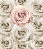 Rose Vintage Flowers Arkivbild