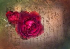 Rose on a vintage letter . Red rose on a vintage letter Royalty Free Stock Images
