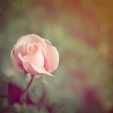 Rose in vintage style Royalty Free Stock Photos