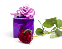Rose and violet gift. On the isolated white background Royalty Free Stock Photo