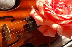 Rose on Violin. Large pink rose on a Violin stock photo