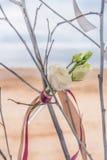 Rose in vitro Stock Photo