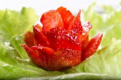 Rose von der Erdbeere auf einem grünen Kopfsalatblatt Lizenzfreies Stockbild