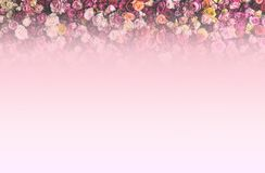 Rose Wall border as background royalty free stock images