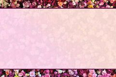 Rose Wall border with faded background stock images