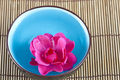Rose in water Royalty Free Stock Photography