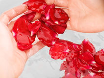 Rose water. Hands for rose petal bowl Royalty Free Stock Photos