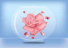 Rose in water. A rose floating in water bowl Stock Image