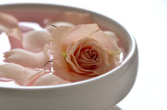 Rose water. Infused water with rose petals in a white bowl Stock Photography