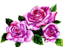 Rose watercolor Royalty Free Stock Image