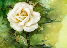 Rose watercolor background Stock Photos