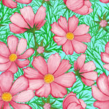 Rose watercolor flower pattern cosmos  on sky blue background  Royalty Free Stock Photo