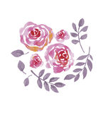 Rose watercolor flowers kit for design. Stock Image