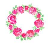 Rose Stock Photos