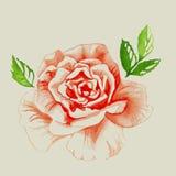 Rose Watercolor roja Imagenes de archivo