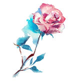 Rose watercolor sketch Royalty Free Stock Photos