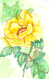Rose watercolor Royalty Free Stock Photography