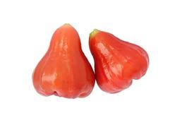 Rose Wax Apple Royalty Free Stock Image