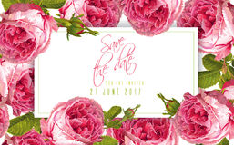 Rose wedding invitation. Vector wedding invitation horizontal card with garden rose flowers on white background. Can be used as floral design for cosmetics Royalty Free Stock Image