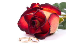 Rose and wedding rings. Red rose and wedding rings on white background Royalty Free Stock Photography