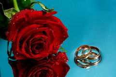 Rose and wedding rings. On a water Stock Photo