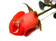 Rose and wedding rings Stock Images