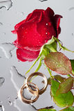 Rose and wedding rings Royalty Free Stock Photo