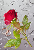 Rose and wedding rings. Beautiful close-up rose and wedding rings with water drops Stock Image