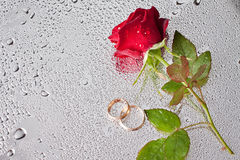 Rose and wedding rings. Beautiful close-up rose and wedding rings with water drops Royalty Free Stock Photo