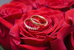 Rose and wedding rings. Red rose and wedding rings Stock Image