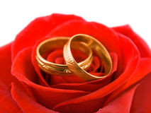 Rose and wedding rings. Isolated on white background Royalty Free Stock Photos