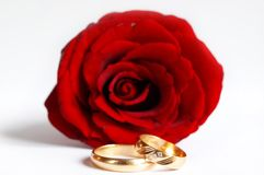 Rose and wedding rings. Isolated on white Royalty Free Stock Images