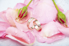 Rose and wedding rings with drops of watter. Romantic scene for wedding card or wedding background Stock Image