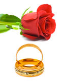 Rose and wedding rings. Isolated on white background Royalty Free Stock Photo