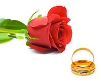 Rose and wedding rings. Isolated on white background Royalty Free Stock Images