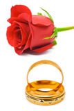 Rose and wedding rings. Isolated on white background Stock Photography