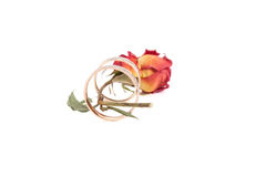 Rose and wedding rings isolated on white background.  Stock Photos