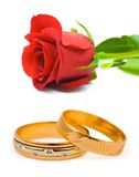 Rose and wedding rings. Isolated on white background Stock Photos