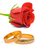 Rose and wedding rings. Isolated on white background Stock Images