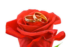 Rose and wedding rings. Isolated on white background Stock Photo
