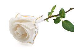 Rose white Royalty Free Stock Photography