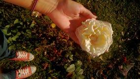 rose white zdjęcie stock
